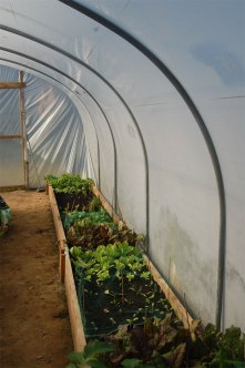 The veg bed in our Poly tunnel at Caer Cadwgan BnB.